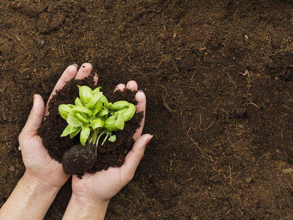 Zemlja za vrt
